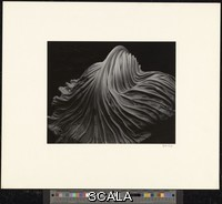 Weston, Edward (1886-1958) Cabbage Leaf. 1931. [full spreading leaf]. Gelatin silver print. Overall, Primary Support: 7 1/2 x 9 1/2 in. (19.1 x 24.1 cm) Overall, Secondary Support: 13 3/4 x 16 in. (34.9 x 40.6 cm) Image: 7 1/2 x 9 1/2 in. (19.1 x 24.1 cm). Gift of Ansel and Virginia Adams. Inv. N.: 76.21.1