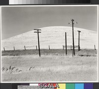 Weston, Edward (1886-1958) Hills and Poles, Solano County. 1937-09-17. [pale rounded hill, telephone poles, grassy field]. Gelatin silver print. Overall, Primary Support: 7 3/8 x 9 7/16 in. (18.8 x 24 cm) Overall, Secondary Support: 13 7/8 x 16 1/16 in. (35.2 x 40.8 cm) Image: 7 3/8 x 9 7/16 in. (18.8 x 24 cm). Edward Weston Archive/Gift of the Heirs of Edward Weston. Inv. N.: 82.10.69