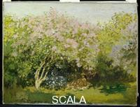 Monet, Claude (1840-1926) Lilla' al sole